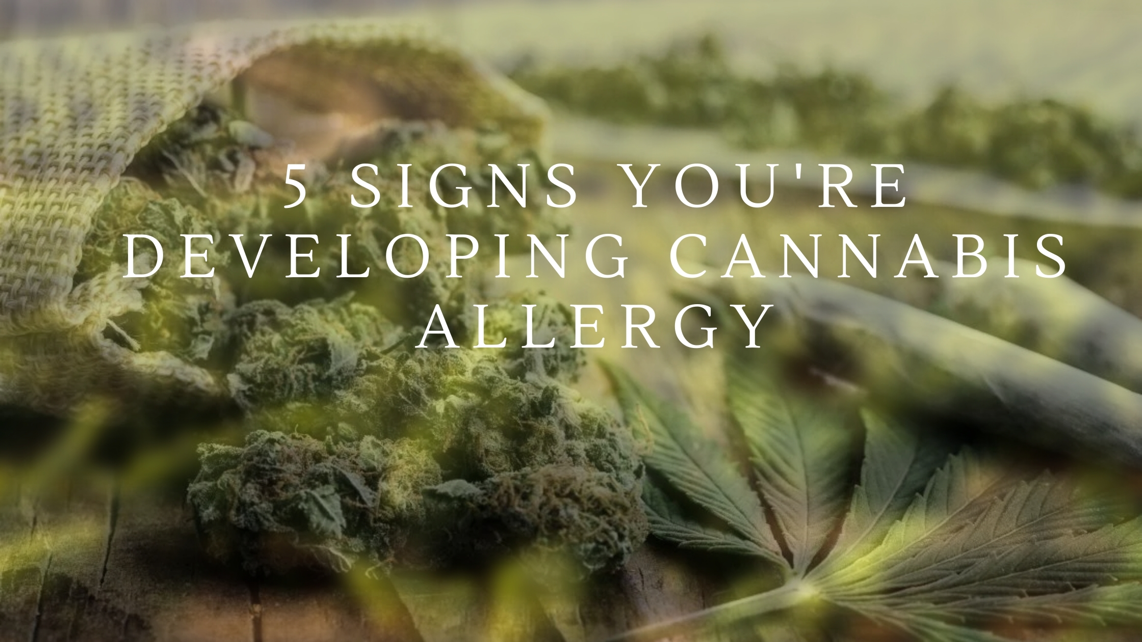 can you be allergic to weed